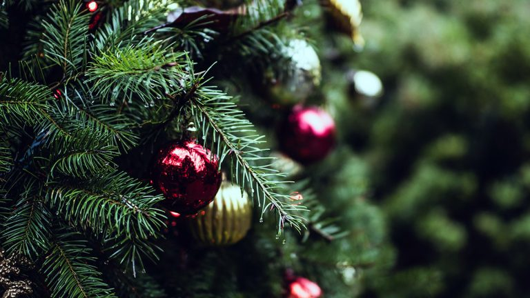 Read more about the article Cleaning Pine Needles Off Your Floor