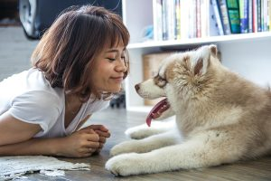 Luxury Vinyl Flooring And Dogs